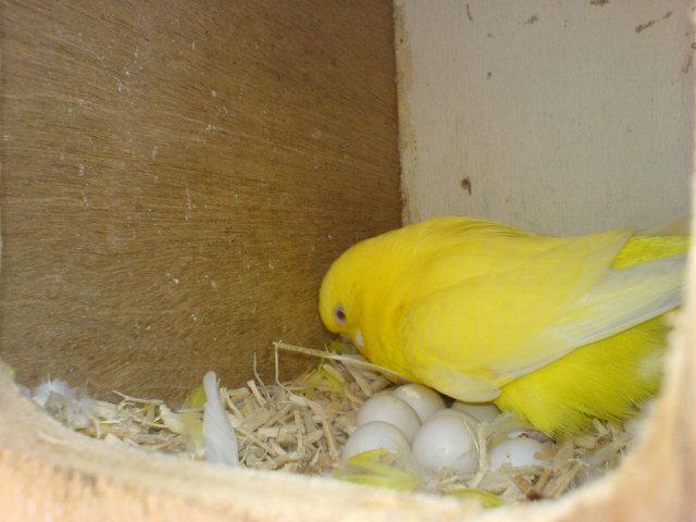 размеры домика для волнистых попугаев своими руками