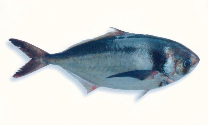 ловится ли рыба на мясо