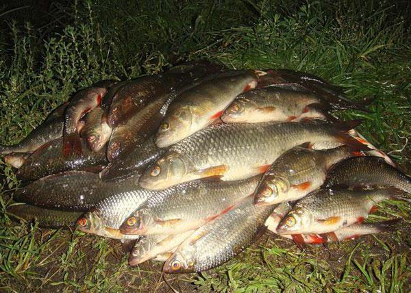 прогноз клева рыбы в белгородской области ракитное