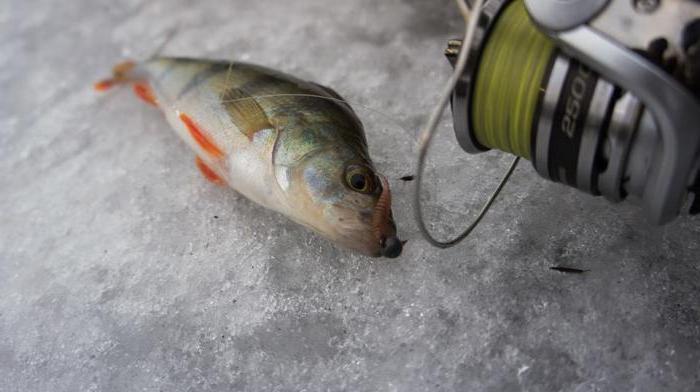 прогноз клева рыбы в новопавловске