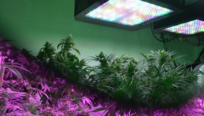 led светильник для растений 50w