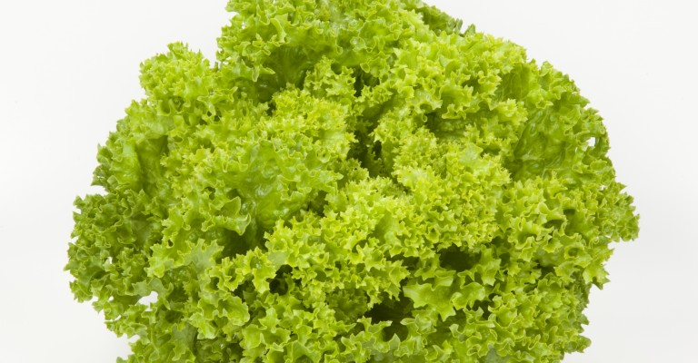 Lollo Bionda salad photo
