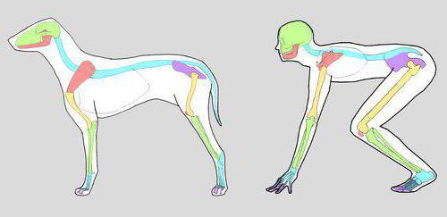 три отличия деятельности человека от поведения животного
