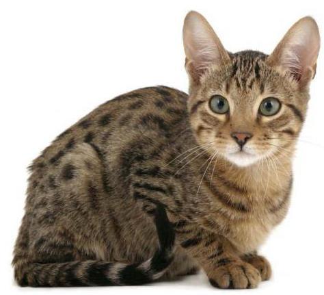 опухла нижняя губа у кошки