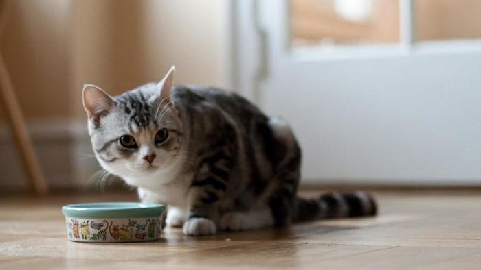 У кота понос с кровью и слизью