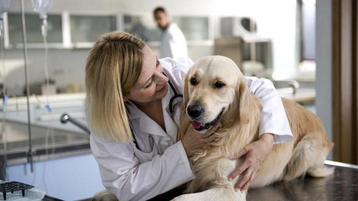фоспасим для собак инструкция - фото 7