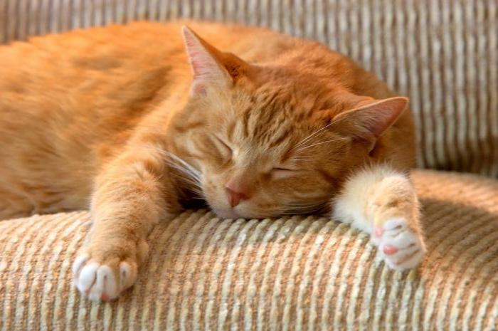 Читать с картинками кот иваныч
