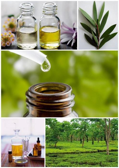 Чайное дерево масло применение от папиллом