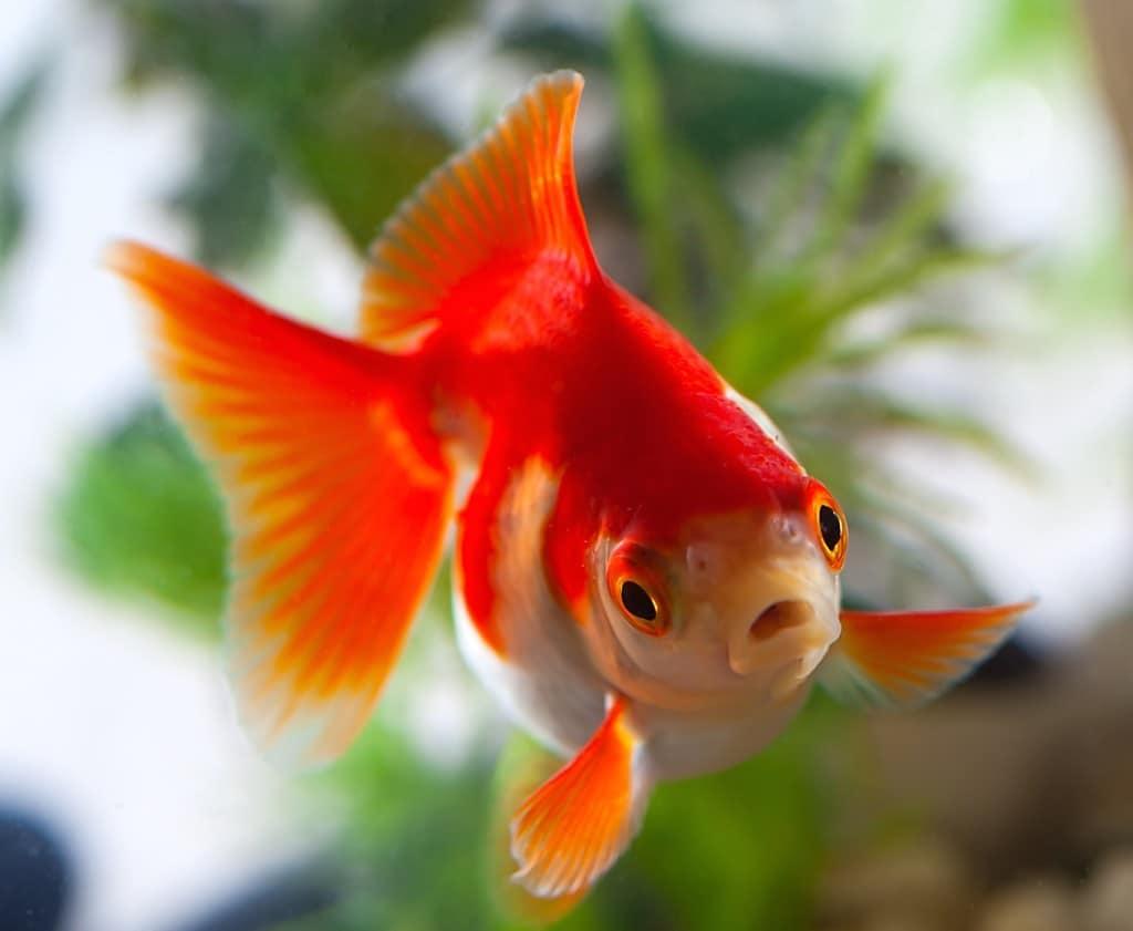 все картинки домашних рыб жаль людей, обладающих