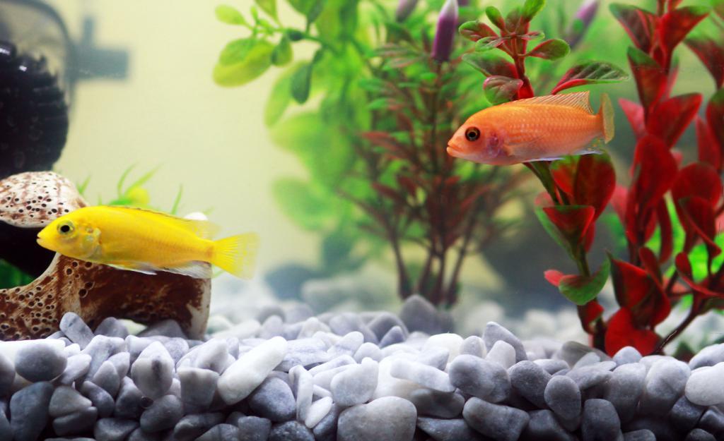 все картинки домашних рыб визит
