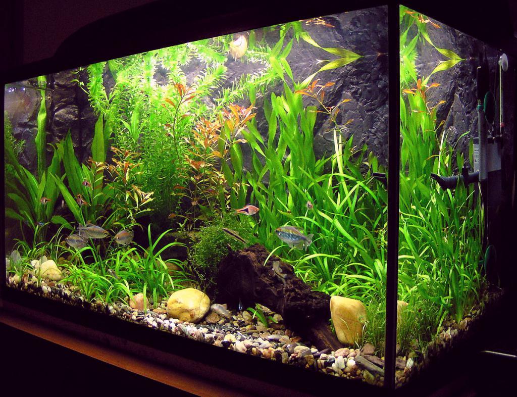как красиво обустроить аквариум фото вход