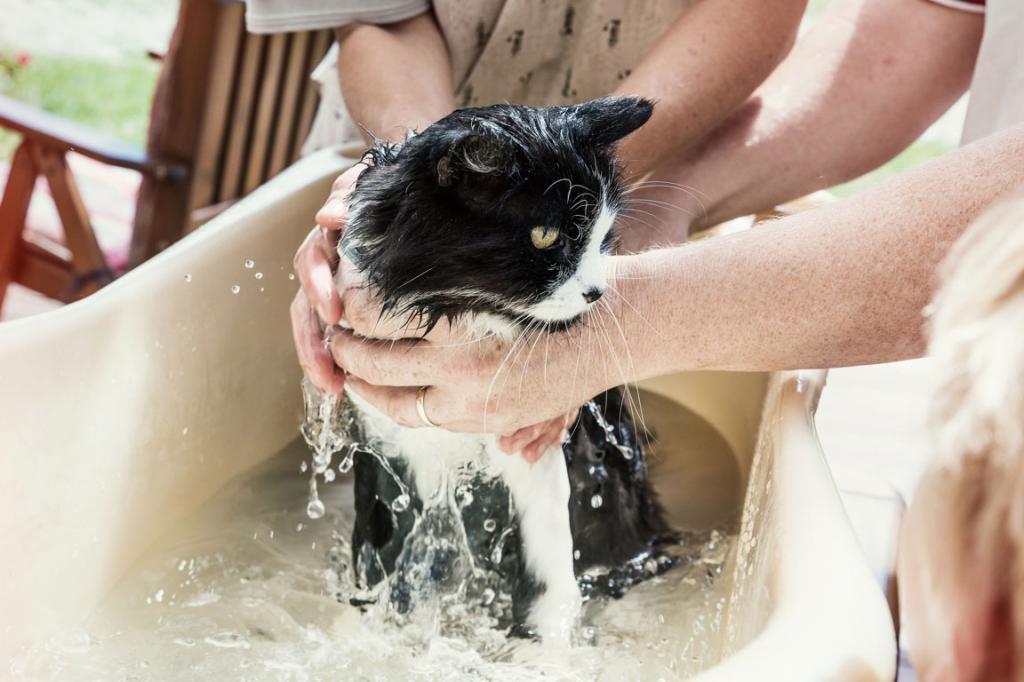 купают домашнюю кошку