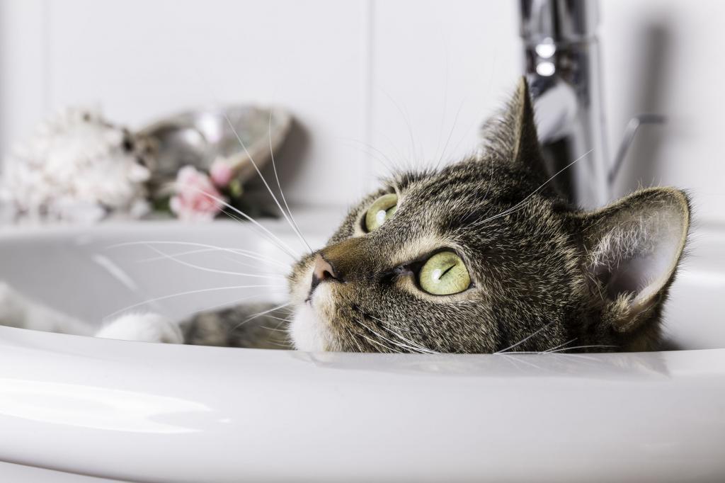 кошка не боится воды