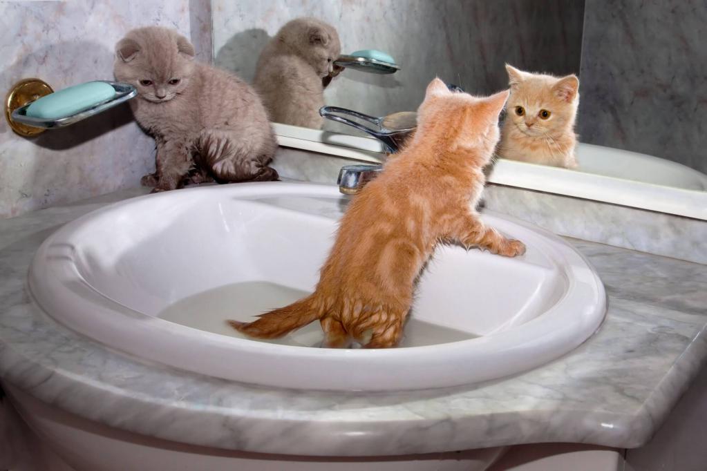 купание маленьких котят