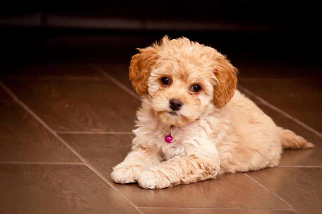 Гибриды собак разных пород: описание и фото