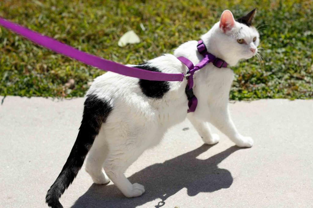 Как свести кошку с котом первый раз: особенности и полезные советы