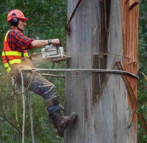 Цепная электропила по дереву какую выбрать