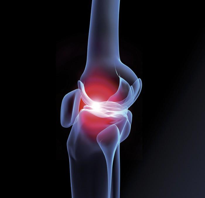 анатомия коленного сустава синельников