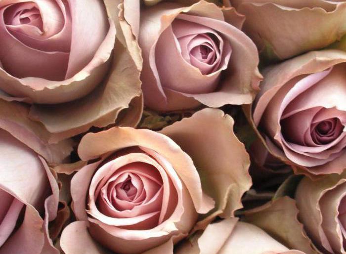 Картинка бежевые цветы