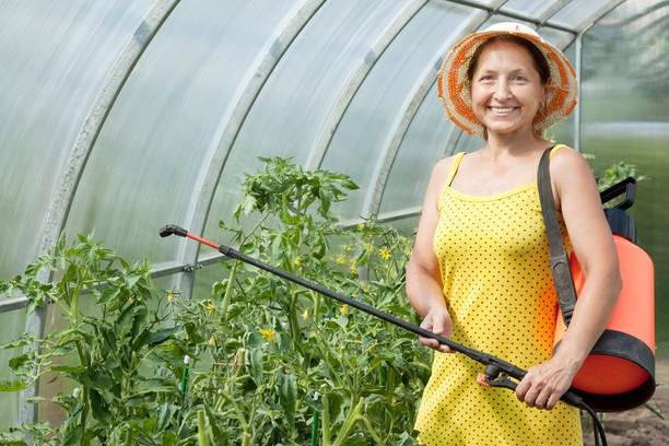 Томат Лисичка характеристика и описание сорта с фото и видео, урожайность помидора, отзывы тех, кто сажал семена