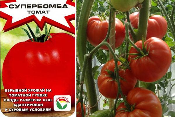 Томат Супербомба: фото с описанием, характеристика сорта, урожайность, отзывы