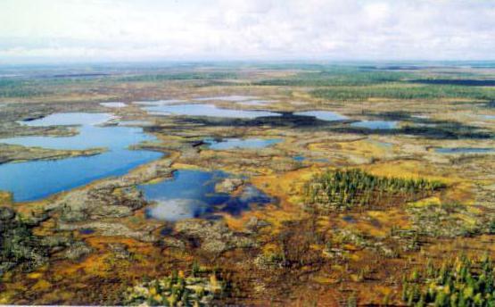 тазовский полуостров россия