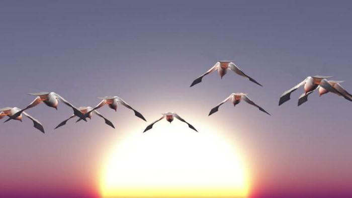 Перелетные птицы. Названия для детей