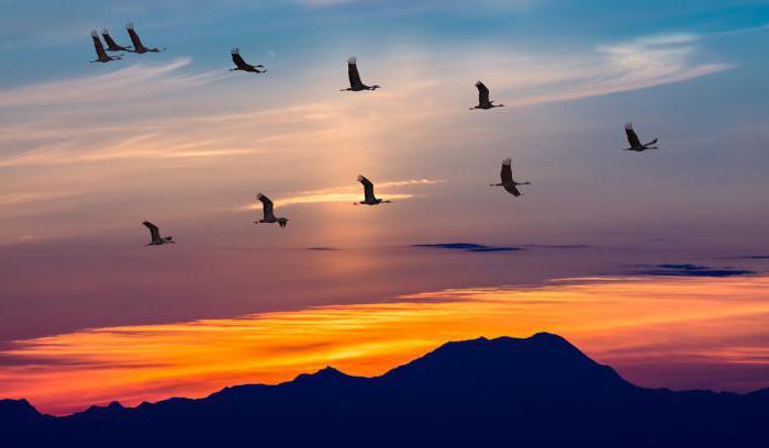 Перелетные птицы. Названия для детей (список)