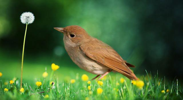 Перелетные птицы. Названия для детей (средняя группа)