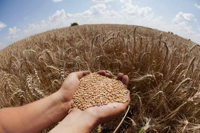 принципы и особенности оборота земель сельскохозяйственного назначения