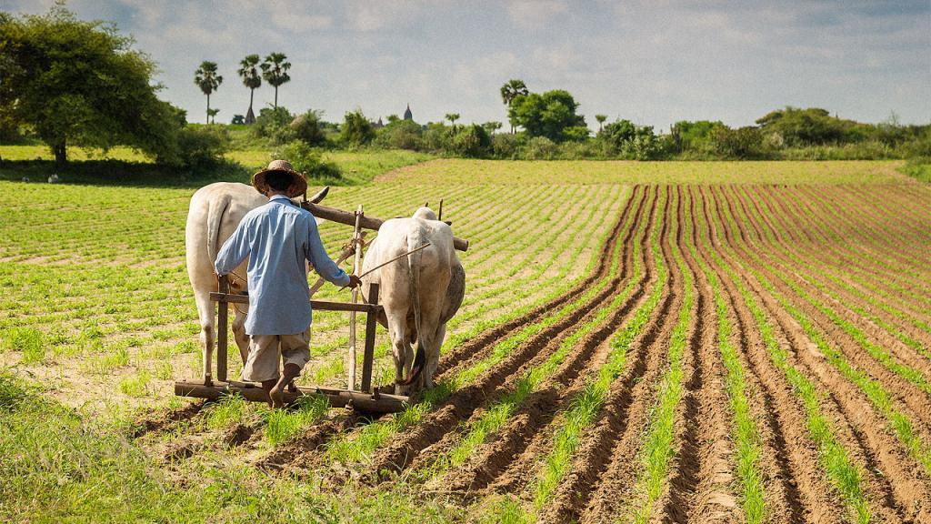 Картинки о земледелии