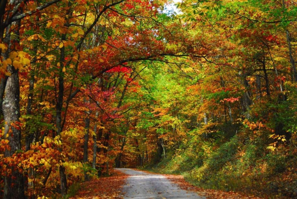 состав земель лесного фонда