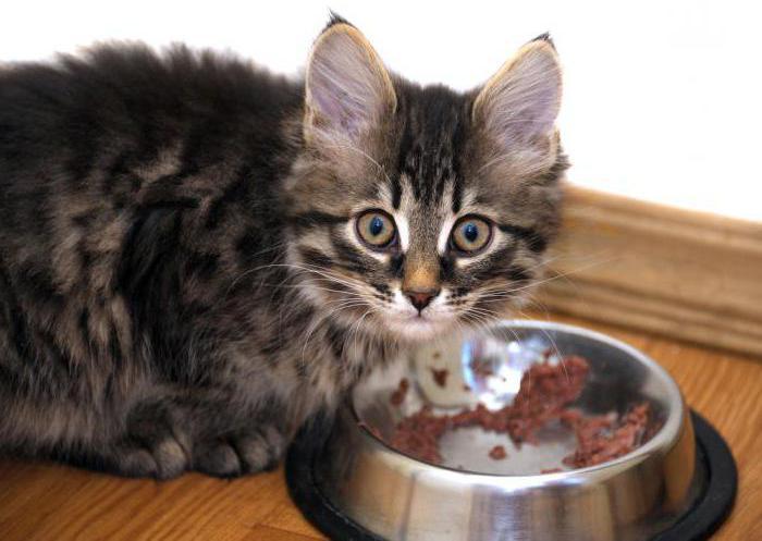 Хороший недорогой влажный корм для котят