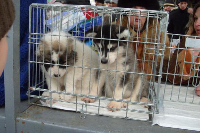 Франківці просять мера заборонити продаж тварин на вулиці Тичини