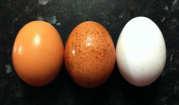 белок куриного яйца бжу