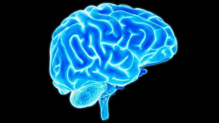 глазодвигательный блоковый и отводящий нервы