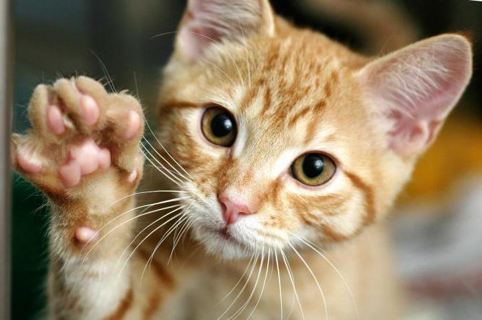 как приучить дикого котенка к туалету
