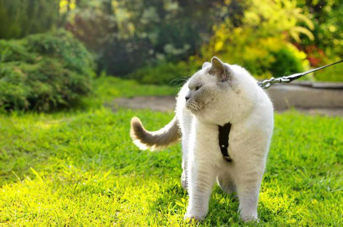как приучить котенка