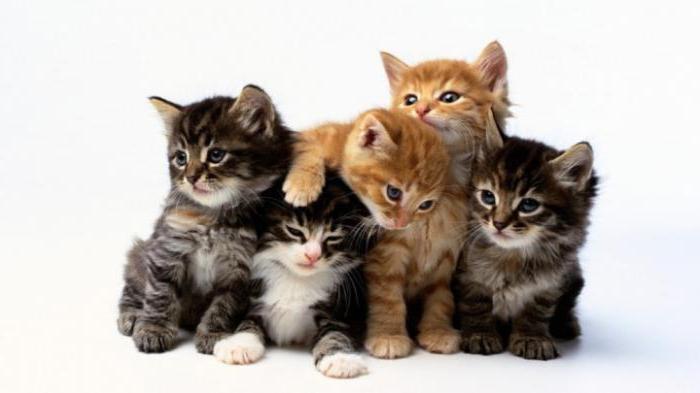 Дикий котенок: как приручить к рукам и лотку?