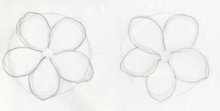 How to draw a scarlet flower: gradual drawing lesson