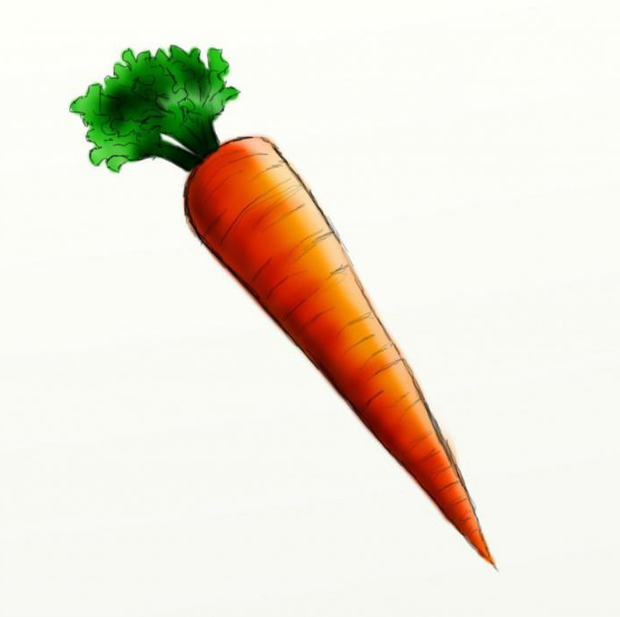 Classes for children: how to draw a carrot in stages