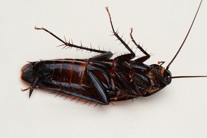 Откуда берутся тараканы и как от них избавиться