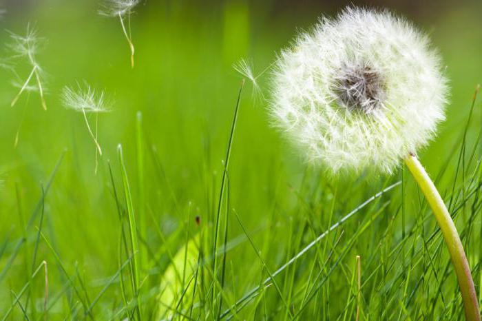 супрастин при аллергии на пыль