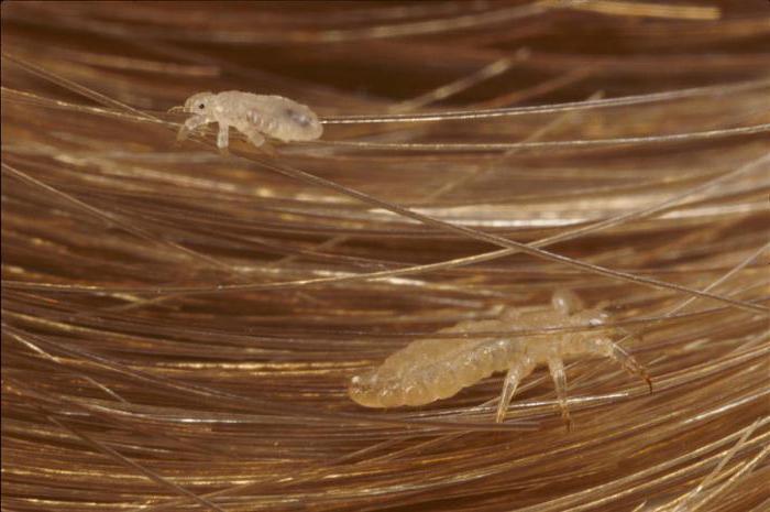 керосин от паразитов отзывы