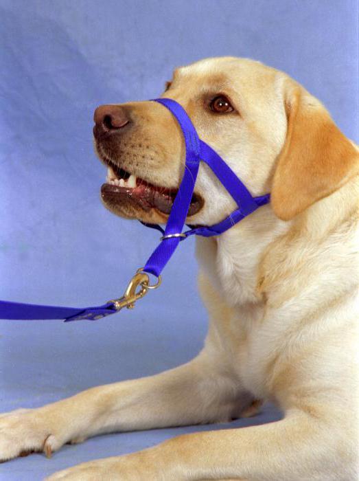 Что можно сделать для собаки своими руками