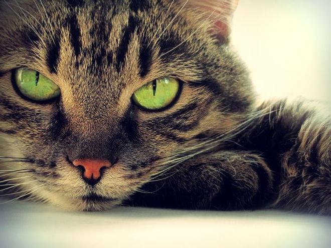 Через сколько отходит наркоз после кастрации кота