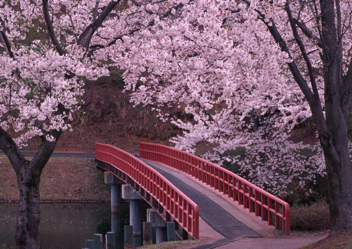 национальные праздники японии