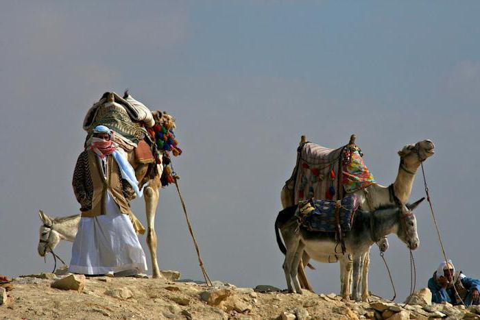 Бедуины и их секс