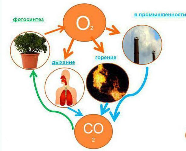 роль кислорода в природе