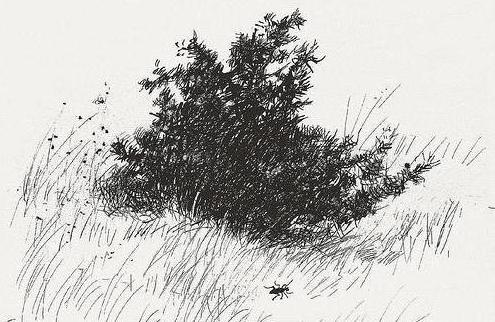 How to draw a Bush with a pencil in stages